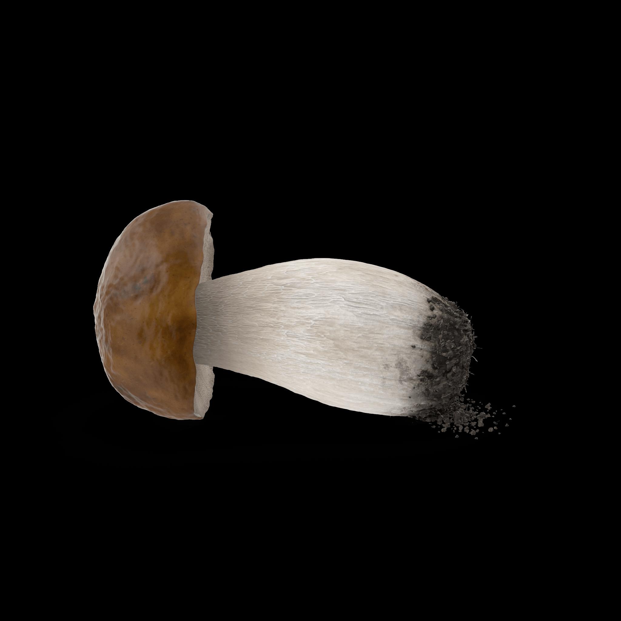 Penny Bun Mushroom.H01.2k (1)